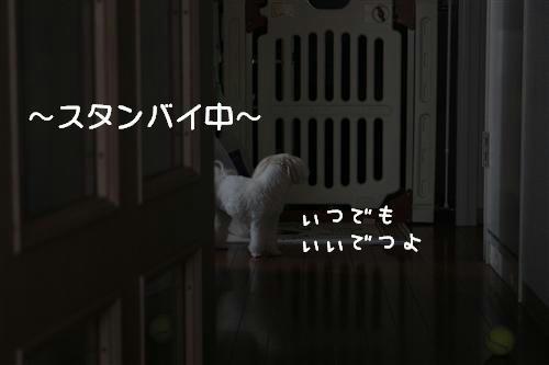 IMG_6262_RR.jpg