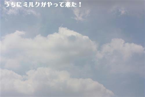 IMG_6381_RR.jpg