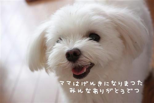 IMG_8557_RR.jpg
