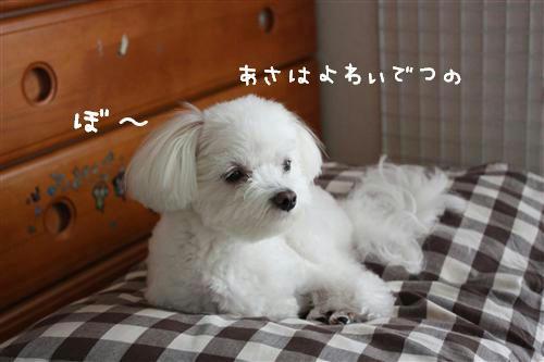 IMG_9611_RR.jpg