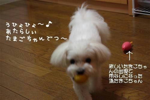 IMG_0024_RR.jpg