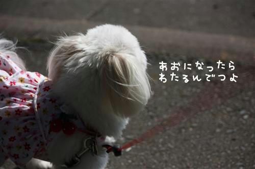 IMG_1641_RR.jpg