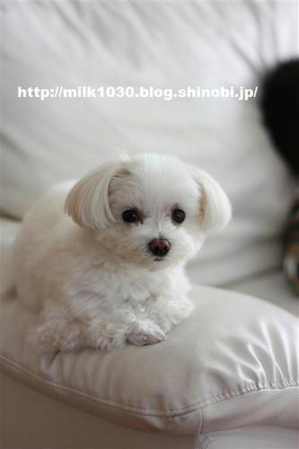 IMG_8442_R.jpg