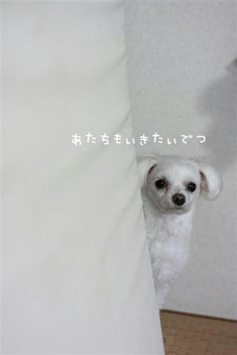 IMG_9399_R.jpg