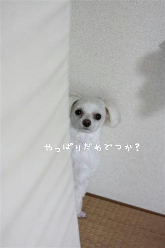 IMG_9403_R.jpg