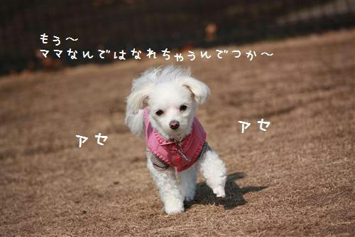 IMG_0484_R.jpg
