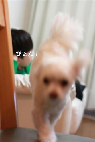 IMG_0601_R.jpg