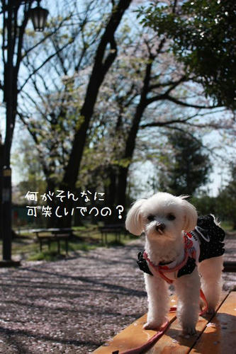 IMG_6262_R.jpg