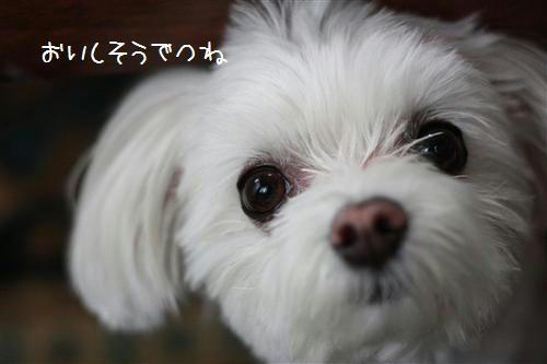 IMG_6708_R.jpg