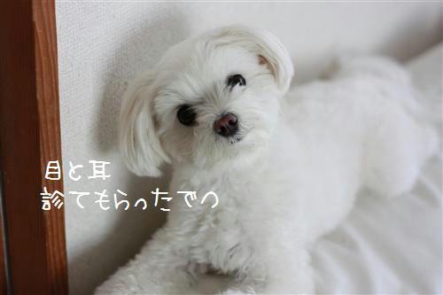IMG_7944_R.jpg
