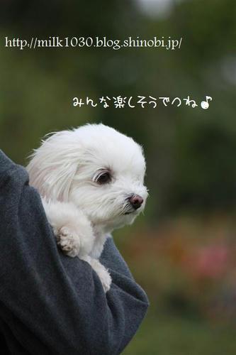 IMG_8078_R.jpg