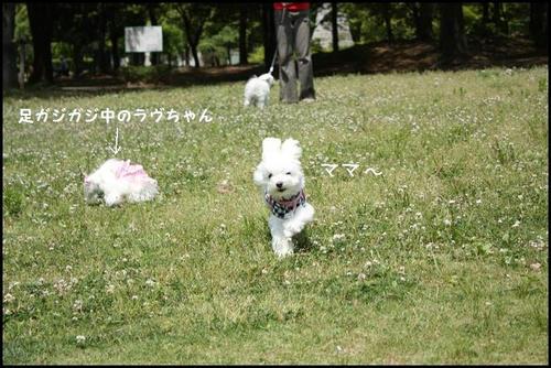 IMG_9015_R.jpg