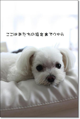 IMG_9813_R.jpg