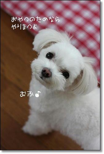 IMG_0569_R.jpg