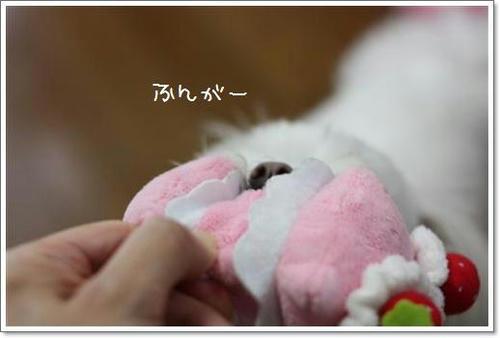 IMG_0643_R.jpg