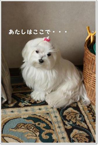 IMG_1042_R.jpg