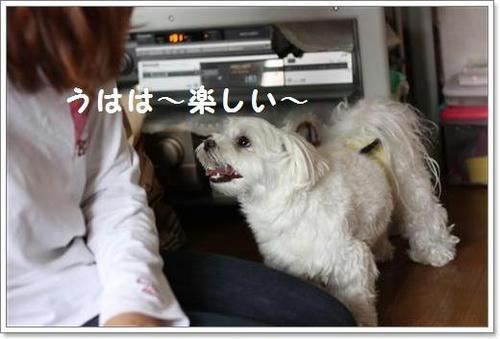 IMG_1045_R.jpg