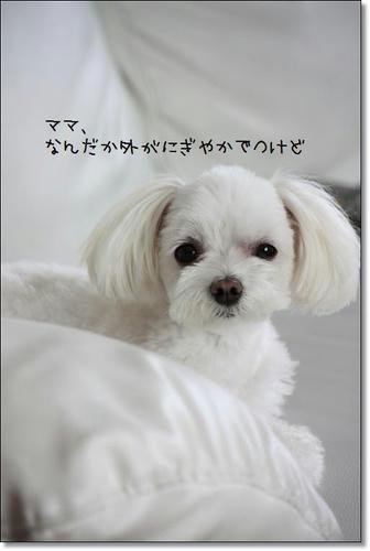 IMG_2696_R.jpg