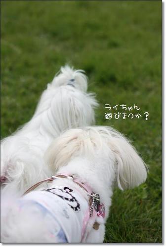 IMG_2926_R.jpg