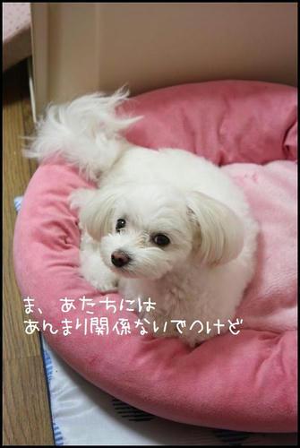 IMG_3176_R.jpg