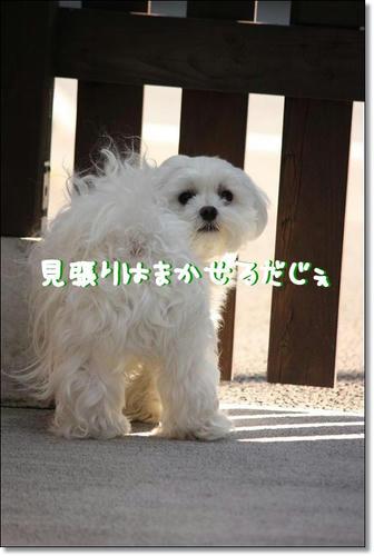 IMG_3851_R.jpg