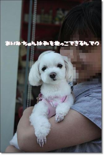 IMG_4020_R.jpg