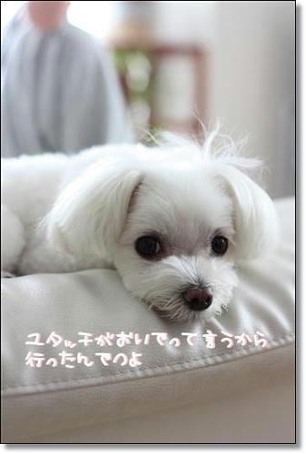 IMG_4129_R.jpg