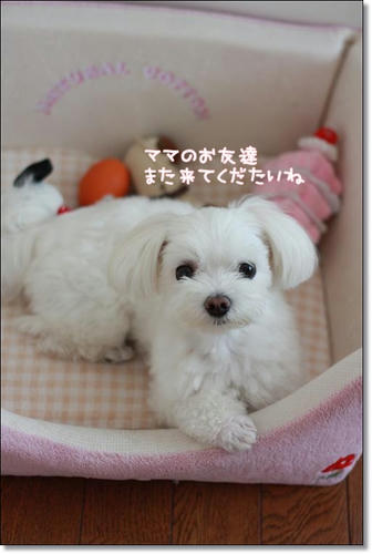 IMG_6159.jpg