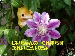 P5070096.jpg