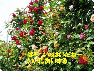 P5160068.jpg