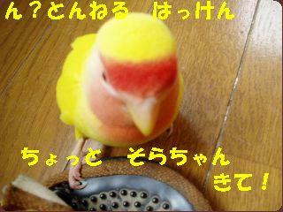 P5140046.jpg