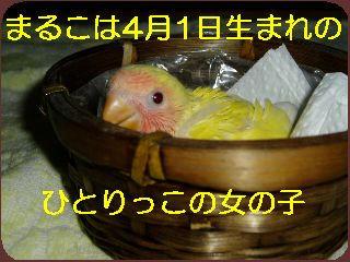 a5b80874.jpg
