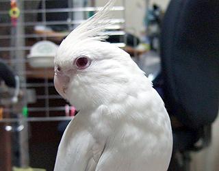 07poria_Profile.jpg