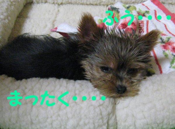 http://file.komacchi.blog.shinobi.jp/IMG_2144-1.JPG