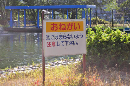 DSC_6452_s.JPG