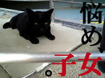 猫師匠のつぶやき