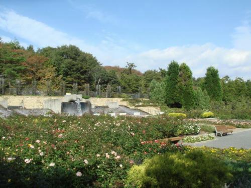 20091020bara1.jpg