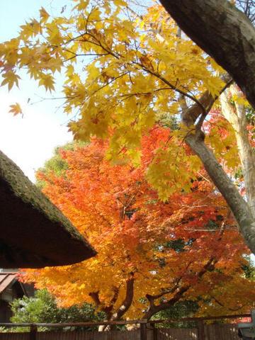 kouyou2009-1.jpg