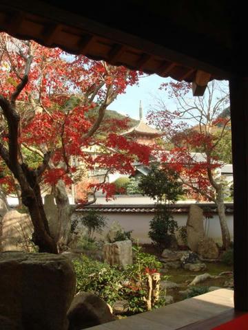 kouyou2009-3.jpg