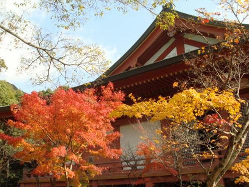 kouyou2009-7.jpg