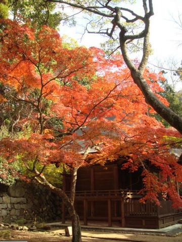 kouyou2009-8.jpg