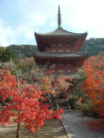 kouyou2009-9.jpg