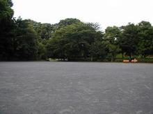 立川公園 菖蒲園