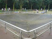 昭和記念公園 霧の森