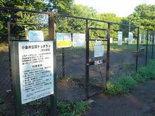 小金井公園 槻の木広場