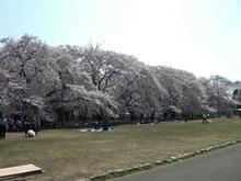 小金井公園 江戸東京たてもの園ビジターセンター前