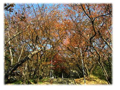 桜並木の紅葉