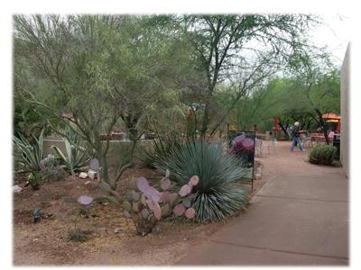 砂漠植物園2