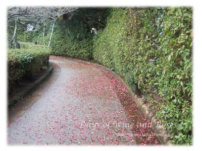 椿の花びら