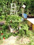 お昼過ぎの庭